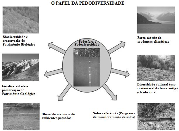 Papel da pedodiversidade e fatores de formação dos solos - Pedodiversity role and factors of soil formation.